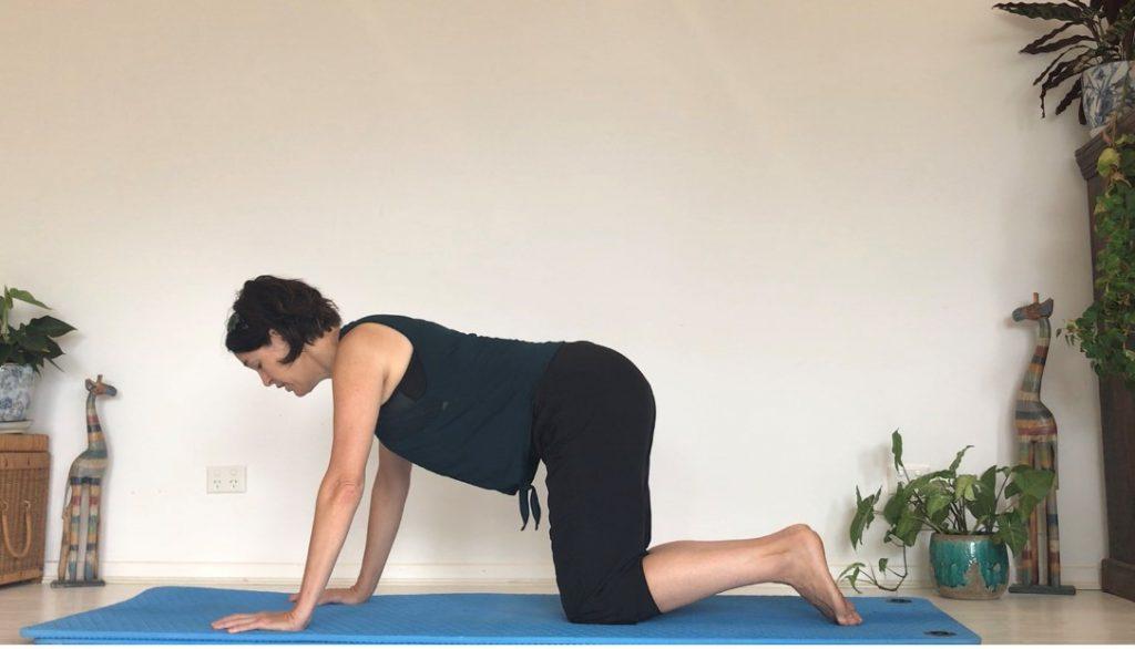 Multifidus Workout